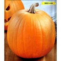 Calabaza Halloween. Envase de 5 Gr.