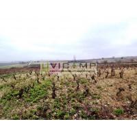 Venta Viñedo en Lanciego D.o.ca. Rioja