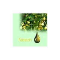 Azadiractina 3,2% (Extracto de Neem)