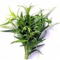 Estragon de Rusia - Artemisia Dracunculus. 1500 Semillas.