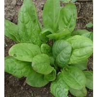 Acedera Silvestre - Rumex Acetosa. 2 Gr / 900