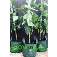 Bolsa de Cultivo Easy-Fill de 100 Lts.