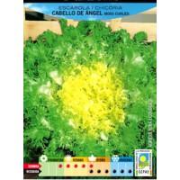 Escarola Rizada Cabello de Angel Ecologico. 0
