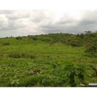 Remato 5000 Hectareas de Terreno Productivo