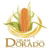 Semillas Maiz Hibrido Gran Dorado