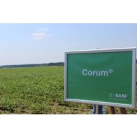 Corum, Herbicida de Post-Emergencia de BASF
