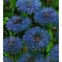 Semillas Centáurea Azul