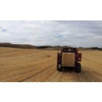 Paja y Forraje Directamenete del Agricultor 40€/tn