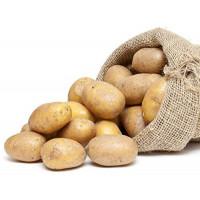 Patata Certificada para Siembra Variedad Desiree Saco 25Kg.