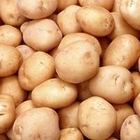 Patatas de Siembra Kennebec 10kg