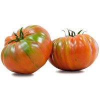 Tomate Raf 270 Plantas