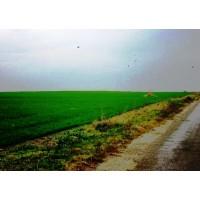 Arrendamiento de Terreno Agrícola en Arad - Rumanía