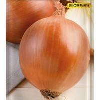 Semillas de Cebolla Babosa Sel. Primosa. Enva