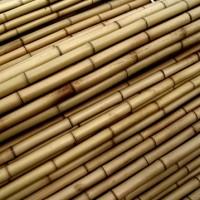 Tutores Tailandeses 180 Cm. 20/22 Mm. Pack de 50