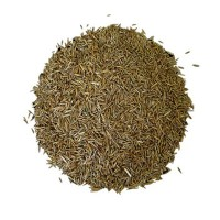 Ray Grass Italiano Diploide Certificado 20 KG