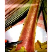 Cardo Rojo Ecológico.  Autóctono de Navarra. 4 Gr / 80 Semillas