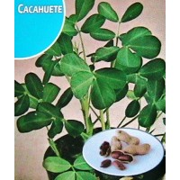 Cacahuetes, Maní (Arachis Hypogaea). Envase Hermético de 10 Gr/8-10 Semillas.