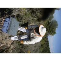 Miel Ecologica  y Tradicional