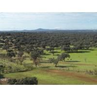 Dehesa 320 Ha de Encina en Sierra de Huelva