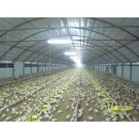 Naves para Ganado Avícola: Pollos, Gallinas ...
