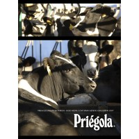 Vaca Lechera Priégola Holstein Frisona Alto Valor Genético