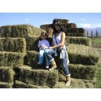 Alfalfa de 1Ra de Santiago del Estero