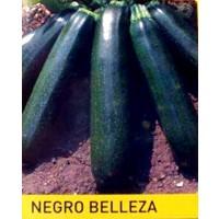 Calabacín Negro Belleza. 100 Gr / 1000 Semill