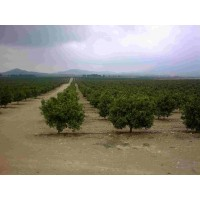 Finca de Agricultura con Agua Abundante: Limones