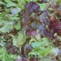 Lechuga Baby Leaf Mix