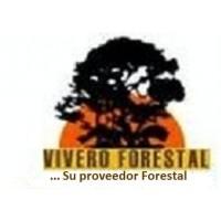 Semillas Forestales