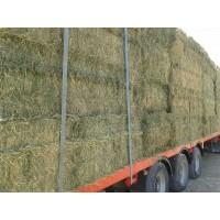 Alfalfa y Paja