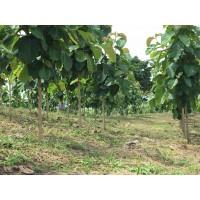 Asesorias Forestales y Desarrollo de Proyectos