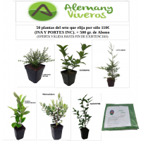 Lote 50 Plantas de Seto