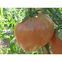 Semillas Tomate Corazón de Buey (500 Semillas