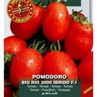 Tomate BIG RIO. Excelente para Conserva y Cru