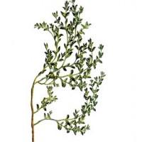 Herniaria Planta Molida 1 Kgr. Propiedades Diuréticas. Herboristeria.