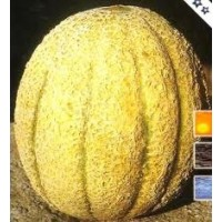 Melon  Sweet Rock. 30 Semillas.