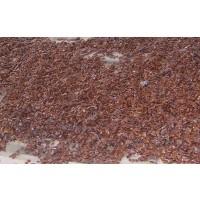Semillas de Kaki, Diospyrus Virginiana 1KG