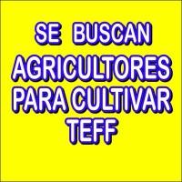 Tierras para Cultivar Teff