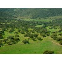 Dehesa de 600 Hectáreas en la Sierra Norte de Sevilla