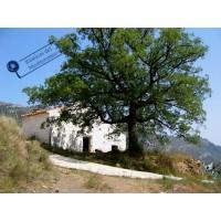 Masia de 16,78 Hectareas - Lucena - Castellon
