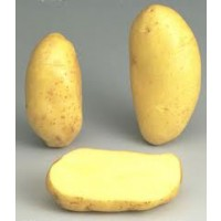 Patata Siembra Jaerla Granel