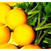 Rabanito-Rabano Amarillo. Yellow. 600 Semillas