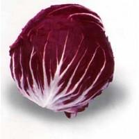 Semillas. Achicoria ROJA de Chioggia. 1,5 Gra