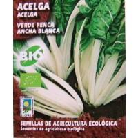 Acelga Verde Penca Blanca. 5 Gr. 300 Semillas