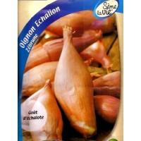 Cebolla Chalota Echalion Zebrune. Rosa. 4 Gr. 800 Semillas