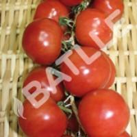 Tomate de Colgar Domingo. Semillas Ecológicas 0.5 Gr