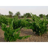 Enmienda Orgánica  Ecofem Pellet para Viñedo