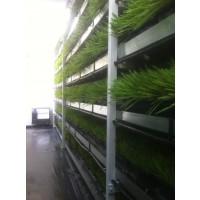 Modulos Produccion Forraje Verde Hidroponico