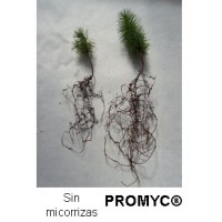 Promyc Forestales, Micorrizas para Planta Forestal y Setas de Bosque